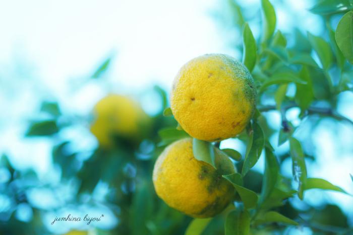 柚子の香りに包まれて_e0268051_15241454.jpg