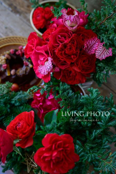 LIVING PHOTO 花の色でデザインするクリスマス _c0250153_14033247.jpg