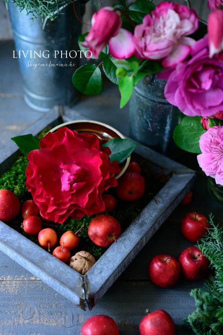 LIVING PHOTO 花の色でデザインするクリスマス _c0250153_14385004.jpg