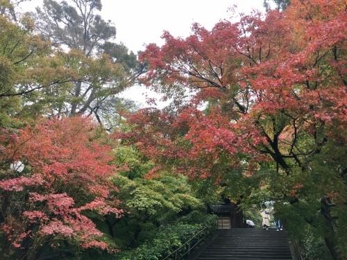 雨の鎌倉、買いまくり食べまくり_e0326953_00100012.jpg