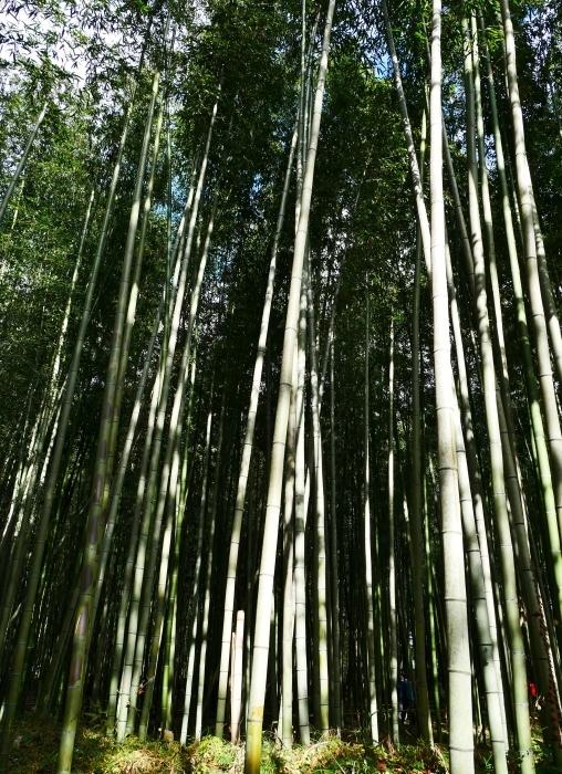 嵯峨・嵐山めぐり、5、竹林の小径から野宮神社へ  2019-12-12 00:00    _b0093754_21362994.jpg