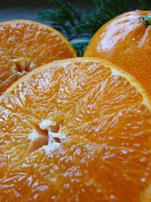 究極の柑橘『せとか』は今年も順調に色づき美味しそうです!ただし収穫及び出荷は2月上旬より!_a0254656_17005139.jpg