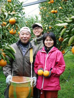 究極の柑橘『せとか』は今年も順調に色づき美味しそうです!ただし収穫及び出荷は2月上旬より!_a0254656_17255799.jpg