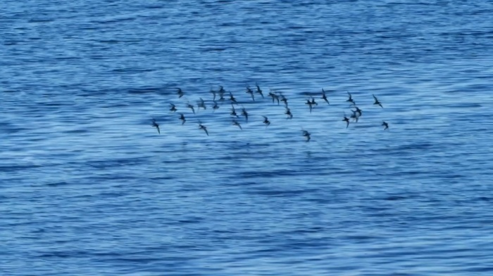群れ飛ぶ鳥を眺めるのがいい_e0039759_23440125.jpg