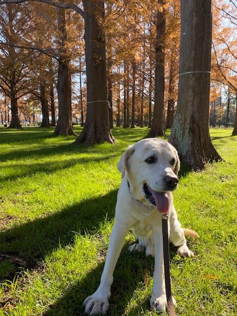 winter park   犬たちを連れて♪_a0165160_15362794.jpg