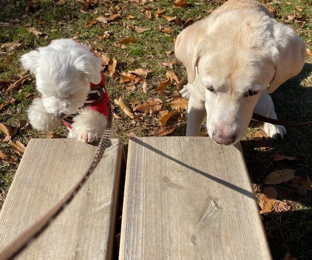 winter park   犬たちを連れて♪_a0165160_15405583.jpg