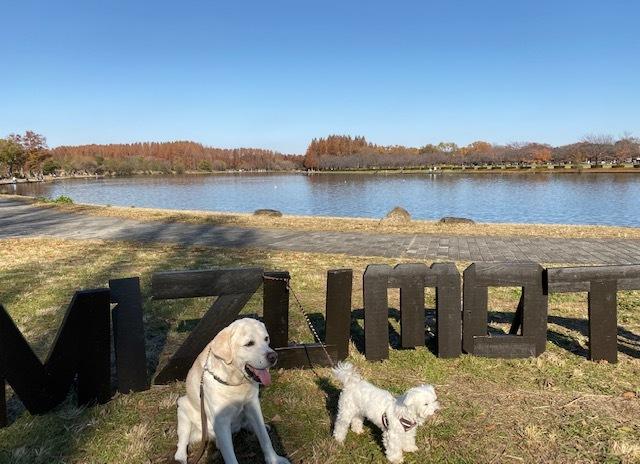winter park   犬たちを連れて♪_a0165160_15415445.jpg