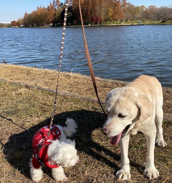 winter park   犬たちを連れて♪_a0165160_16040544.jpg