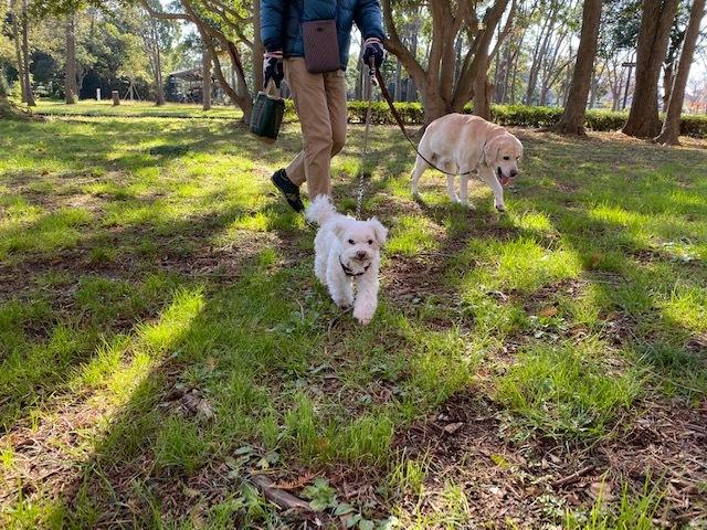 winter park   犬たちを連れて♪_a0165160_16045185.jpg