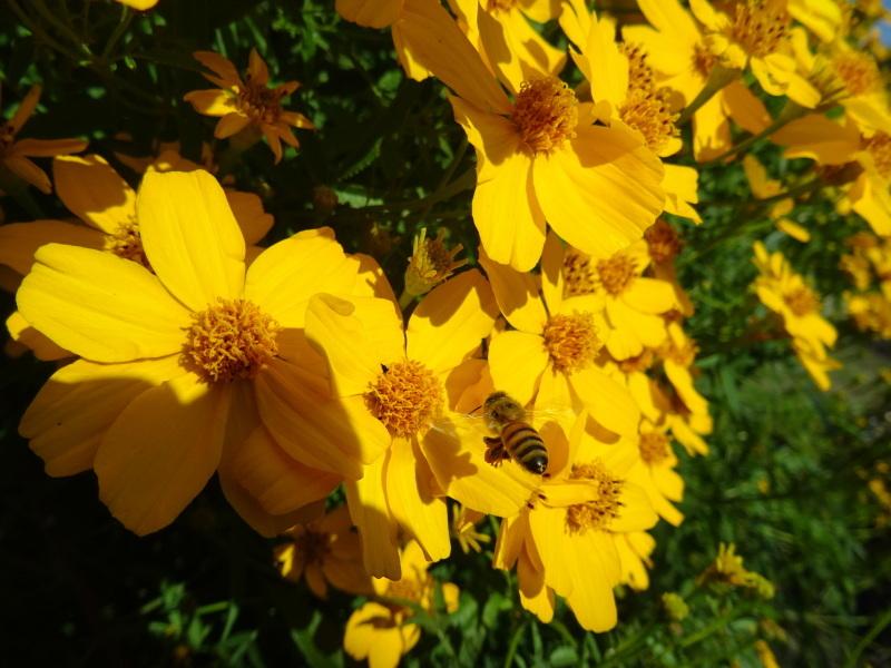小春日和は 我が家の花壇作業_c0108460_17183652.jpg