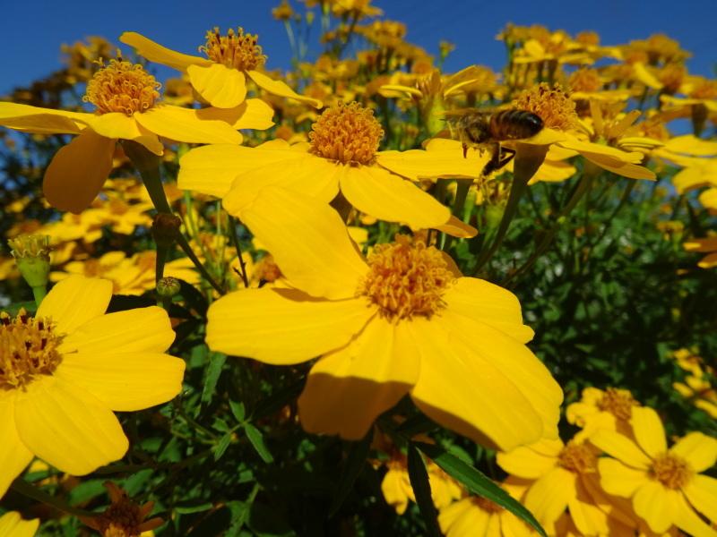 小春日和は 我が家の花壇作業_c0108460_17183758.jpg