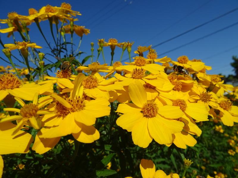 小春日和は 我が家の花壇作業_c0108460_17183791.jpg