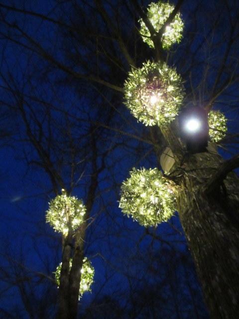 「幸せが灯る街」ハルニレテラスのクリスマス * 幸せのやどりぎ点灯式♪_f0236260_00195956.jpg