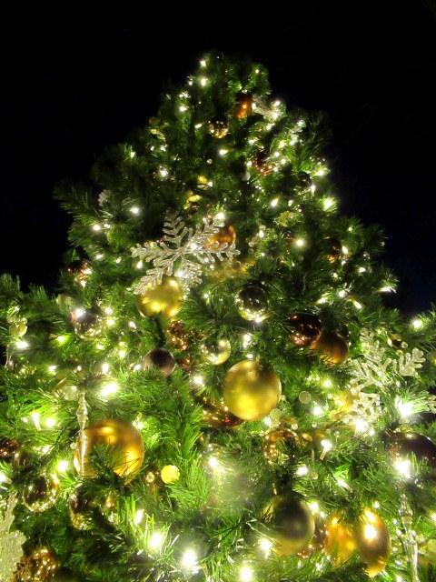 「幸せが灯る街」ハルニレテラスのクリスマス * 幸せのやどりぎ点灯式♪_f0236260_00335194.jpg