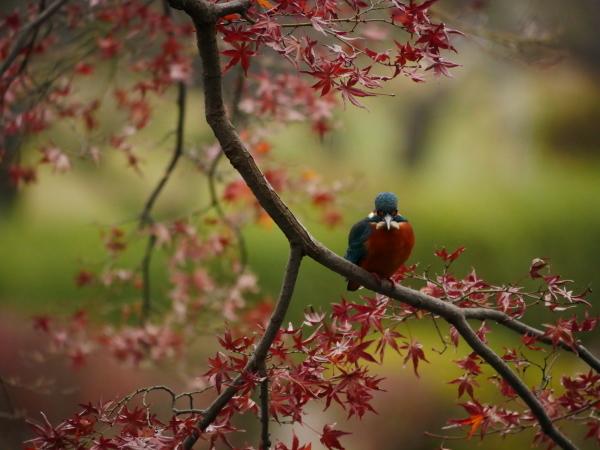 晩秋の野鳥たち_a0351368_23464020.jpg