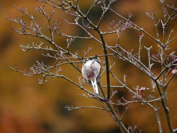 晩秋の野鳥たち_a0351368_23472326.jpg