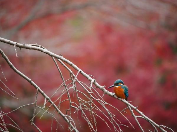 晩秋の野鳥たち_a0351368_23482440.jpg