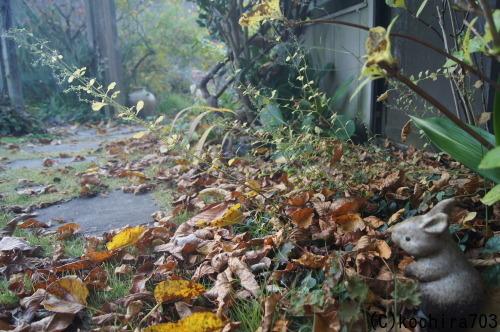 落ち葉の庭_e0181373_22200961.jpg