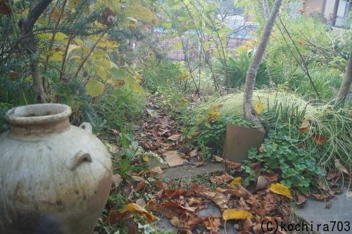 落ち葉の庭_e0181373_22201975.jpg