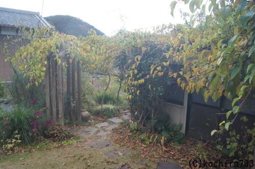 落ち葉の庭_e0181373_22203608.jpg