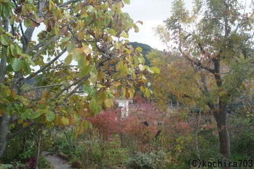 落ち葉の庭_e0181373_22205104.jpg