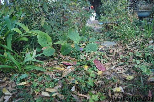 落ち葉の庭_e0181373_22210633.jpg