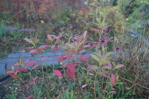 落ち葉の庭_e0181373_22242741.jpg