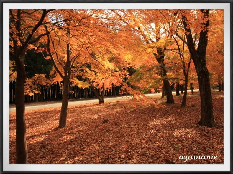 千本松牧場 隠れた紅葉の名所_d0376975_21394000.jpg