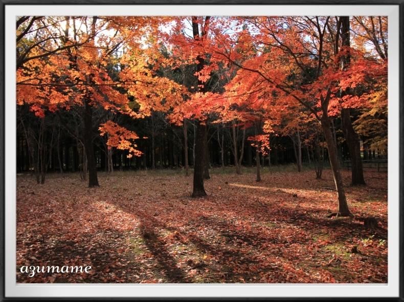 千本松牧場 隠れた紅葉の名所_d0376975_21400904.jpg