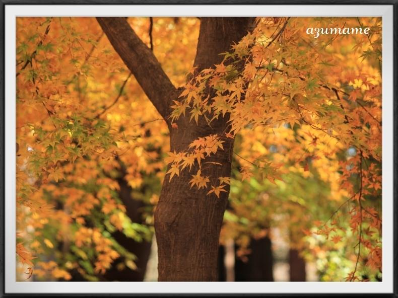 千本松牧場 隠れた紅葉の名所_d0376975_21403181.jpg