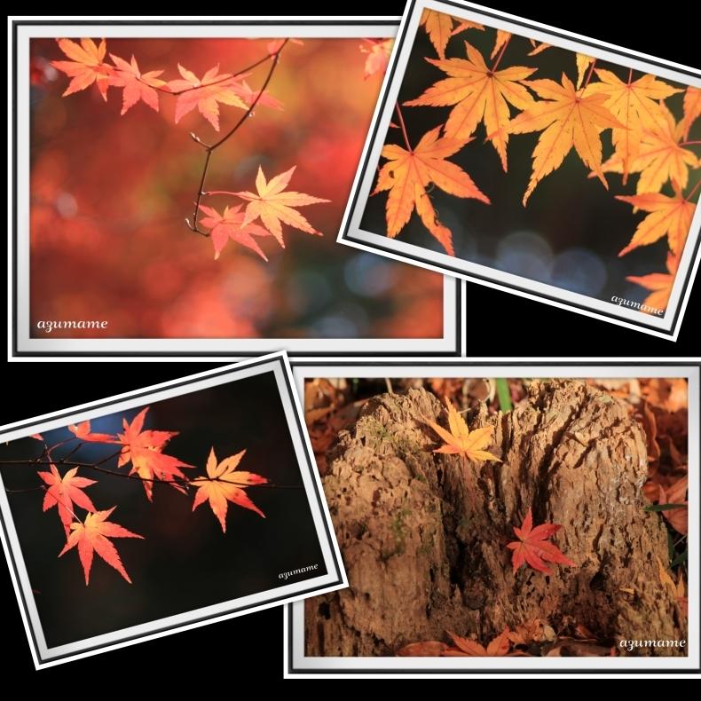 千本松牧場 隠れた紅葉の名所_d0376975_21473688.jpg