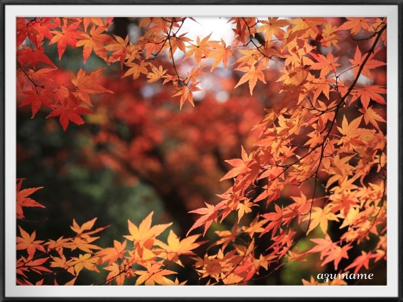 千本松牧場 隠れた紅葉の名所_d0376975_21475740.jpg
