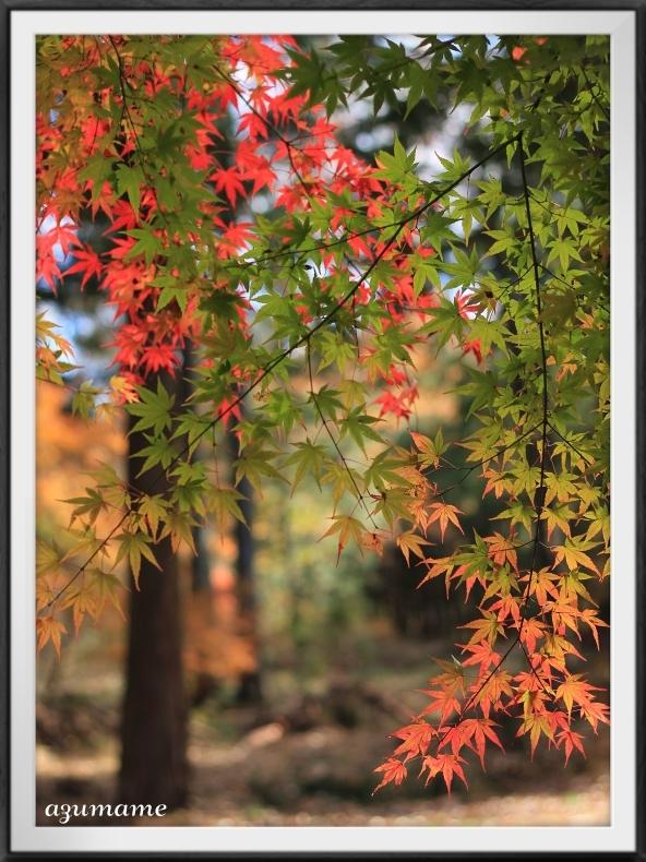 千本松牧場 隠れた紅葉の名所_d0376975_21481389.jpg