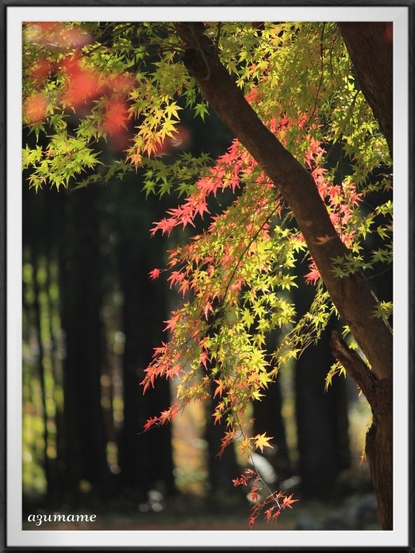 千本松牧場 隠れた紅葉の名所_d0376975_21482928.jpg