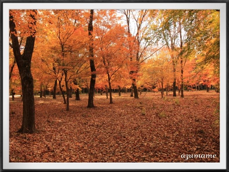 千本松牧場 隠れた紅葉の名所_d0376975_21491850.jpg