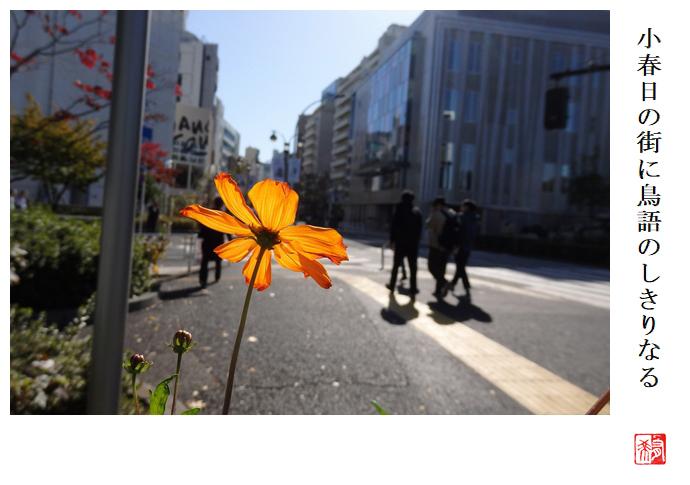 小春日の街に鳥語のしきりなる_a0248481_23095956.jpg