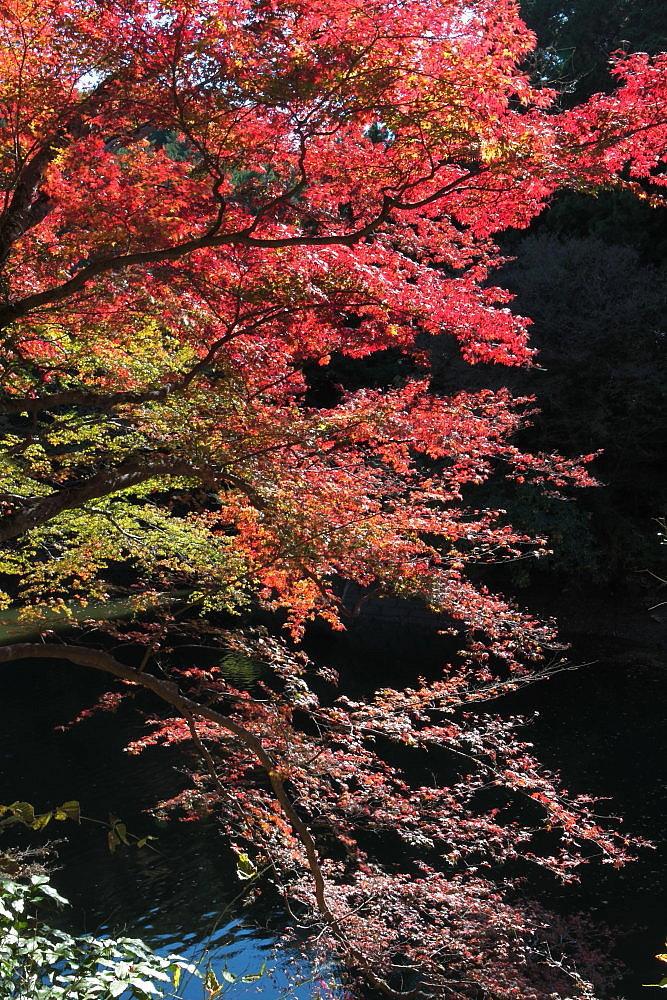 毛呂山町 モミジの鎌北湖 その1_e0165983_10260124.jpg