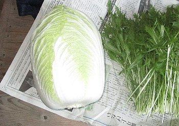 12月7日「白菜初収穫」_f0003283_07193343.jpg