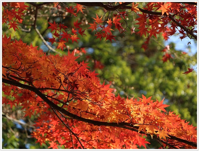 名古屋発、おひとり参加のツアー 備忘録 その2 多良峡から鶏足寺、その前に昼食もね_b0175688_00024642.jpg