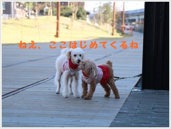 日差しがとっても暖かかったから、新しくできた公園でお散歩だよ~_b0175688_19585257.jpg