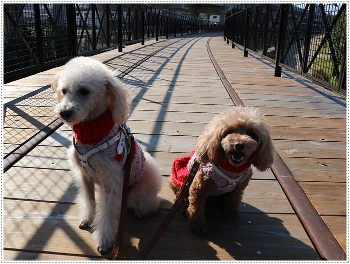 日差しがとっても暖かかったから、新しくできた公園でお散歩だよ~_b0175688_20004227.jpg