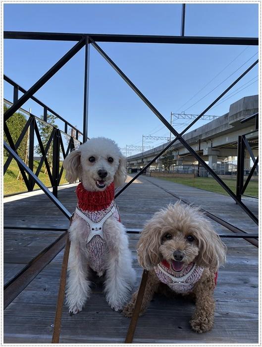日差しがとっても暖かかったから、新しくできた公園でお散歩だよ~_b0175688_20025137.jpg