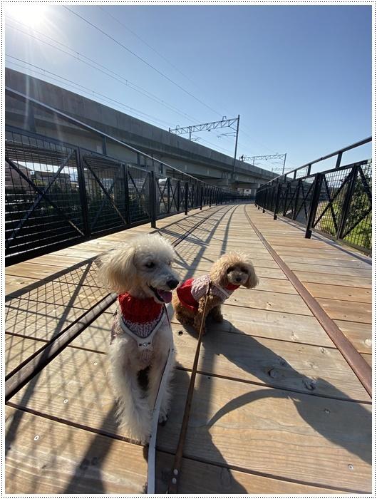 日差しがとっても暖かかったから、新しくできた公園でお散歩だよ~_b0175688_20060824.jpg