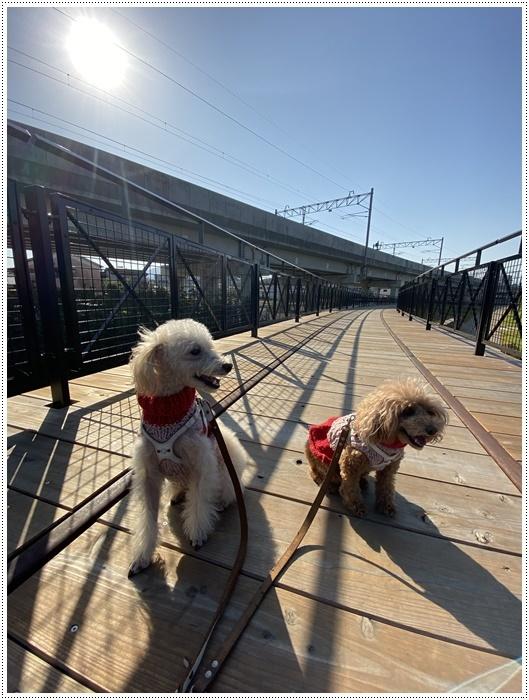 日差しがとっても暖かかったから、新しくできた公園でお散歩だよ~_b0175688_20061415.jpg