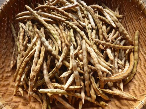 大豆と小豆の収穫、冬に向かう畑_d0366590_19224401.jpg