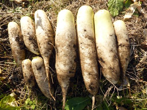 大豆と小豆の収穫、冬に向かう畑_d0366590_19300770.jpg