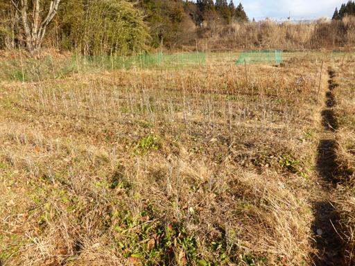 大豆と小豆の収穫、冬に向かう畑_d0366590_19374155.jpg