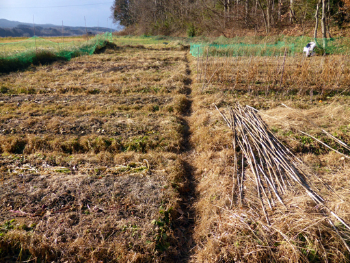 大豆と小豆の収穫、冬に向かう畑_d0366590_19374458.jpg