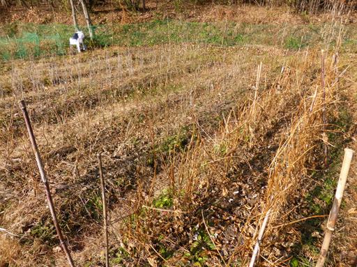 大豆と小豆の収穫、冬に向かう畑_d0366590_19374495.jpg