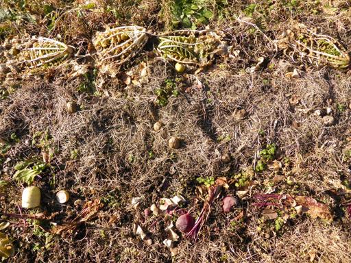 大豆と小豆の収穫、冬に向かう畑_d0366590_19394318.jpg